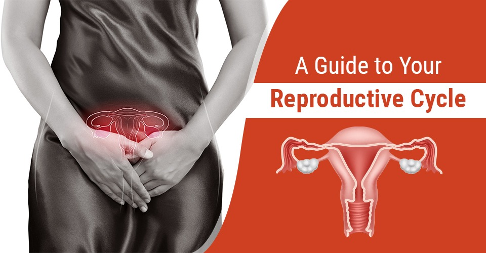 Your Reproductive Cycle: A Complete Guide